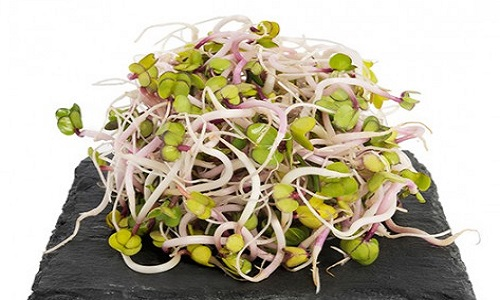 germinats